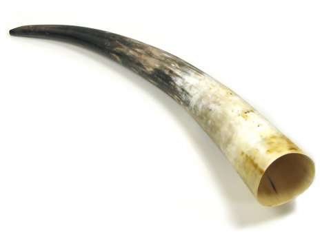 Polished Ox Horn